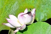 蜻蜓之吻:DSC_0001
