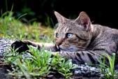 喵喵 ●  貓:DSC_0145
