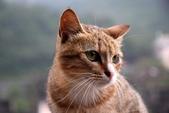 喵喵 ●  貓:DSC_0024