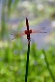 蜻蜓之吻:DSC_0182