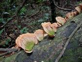 野生菇:DSCN1462
