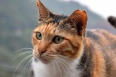 喵喵 ●  貓:DSC_0014
