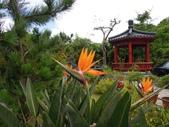 蕉科植物:天堂鳥蕉