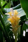 薑科植物...2:皇帝