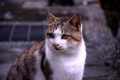 喵喵 ●  貓:DSC_0110