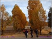2014 世界屋脊 : 西藏 @ 塞外江南 ~ 林芝:PA153965.jpg