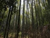 2014  花現日本 @ 京都嵐山:P4033061.jpg