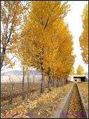 2014 世界屋脊 : 西藏 @ 塞外江南 ~ 林芝:PA153964.jpg