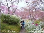 2014 花現日本 @ 京都金閣寺:P4043278.jpg