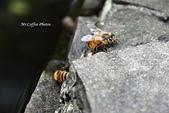 12.08.29【雲林。古坑】蜜蜂故事館:IMG_0344.JPG