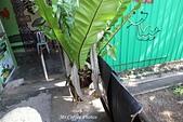 03.12-3蛇廟:IMG_9875.JPG