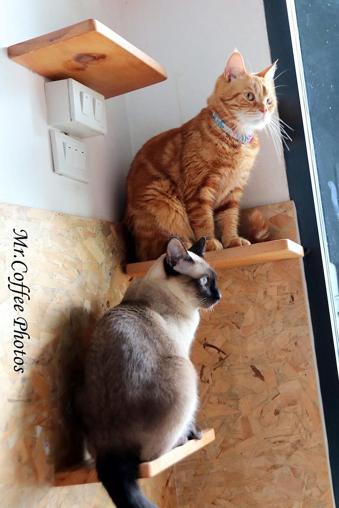 IMG_3284.JPG - D17清邁 3貓咖啡 Catmosphere Cat Café
