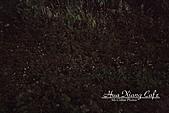 11.04.27【古坑】《山豬湖》賞螢火蟲:這種環境拍照是第一次,完全看不到相機按鍵,所有設定都是憑感覺在操作