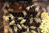 12.08.29【雲林。古坑】蜜蜂故事館:IMG_0364.JPG