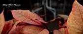 07.02.10【南投】《牛耳藝術渡假村》:IMG_2708.JPG