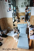 D17清邁 3貓咖啡 Catmosphere Cat Café:IMG_3316.JPG