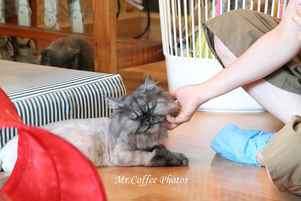 IMG_3360.JPG - D17清邁 3貓咖啡 Catmosphere Cat Café