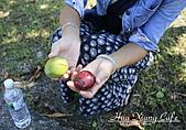 09.10.29【宜蘭】《親水公園》:成熟的海檬看起來是蠻好吃的