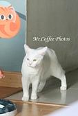 D17清邁 3貓咖啡 Catmosphere Cat Café:IMG_3277.JPG