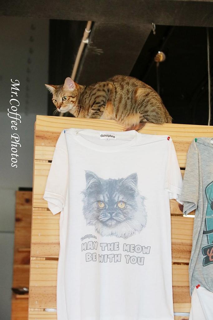 IMG_20180524_223923.JPG - D17清邁 3貓咖啡 Catmosphere Cat Café