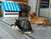 黑糖來了,體力驚人的三腳狗:IMG_20180214_135049.jpg