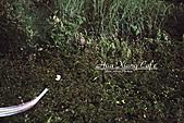 11.04.27【古坑】《山豬湖》賞螢火蟲:這張螢火蟲最多,剛好有一隻飛過鏡頭前,沒錯,那些小點點也是螢火蟲