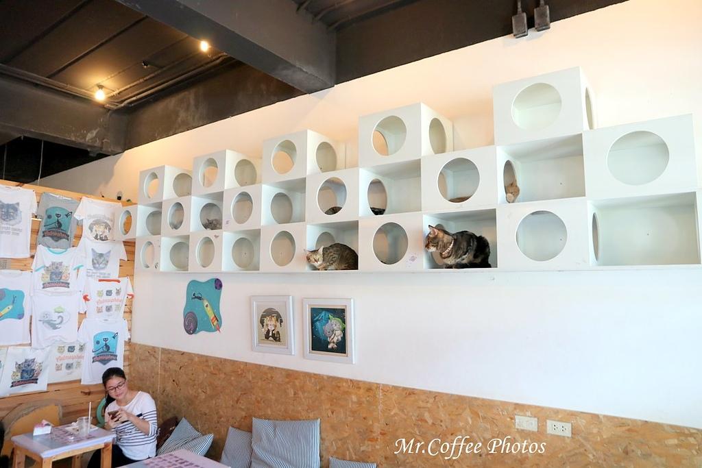 IMG_3437.JPG - D17清邁 3貓咖啡 Catmosphere Cat Café