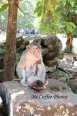 D14暹粒 5塔布隆寺-樹中廟、猴子與咖啡:IMG_2071.JPG