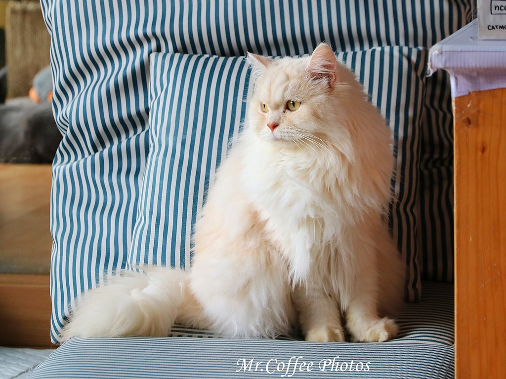 IMG_20180524_225127.JPG - D17清邁 3貓咖啡 Catmosphere Cat Café