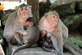 D14暹粒 5塔布隆寺-樹中廟、猴子與咖啡:IMG_2145.JPG