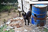 11.02.23【中橫】台灣最美的公路:看家的小黑狗