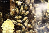 12.08.29【雲林。古坑】蜜蜂故事館:IMG_0363.JPG