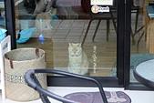 D17清邁 3貓咖啡 Catmosphere Cat Café:IMG_3243.JPG