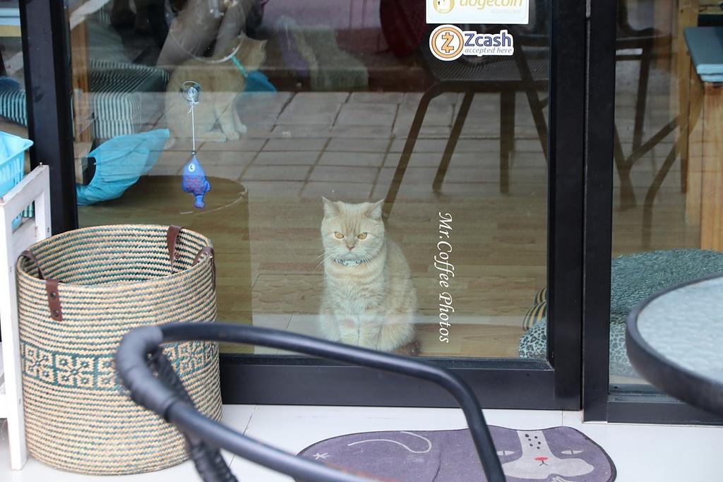 IMG_3243.JPG - D17清邁 3貓咖啡 Catmosphere Cat Café
