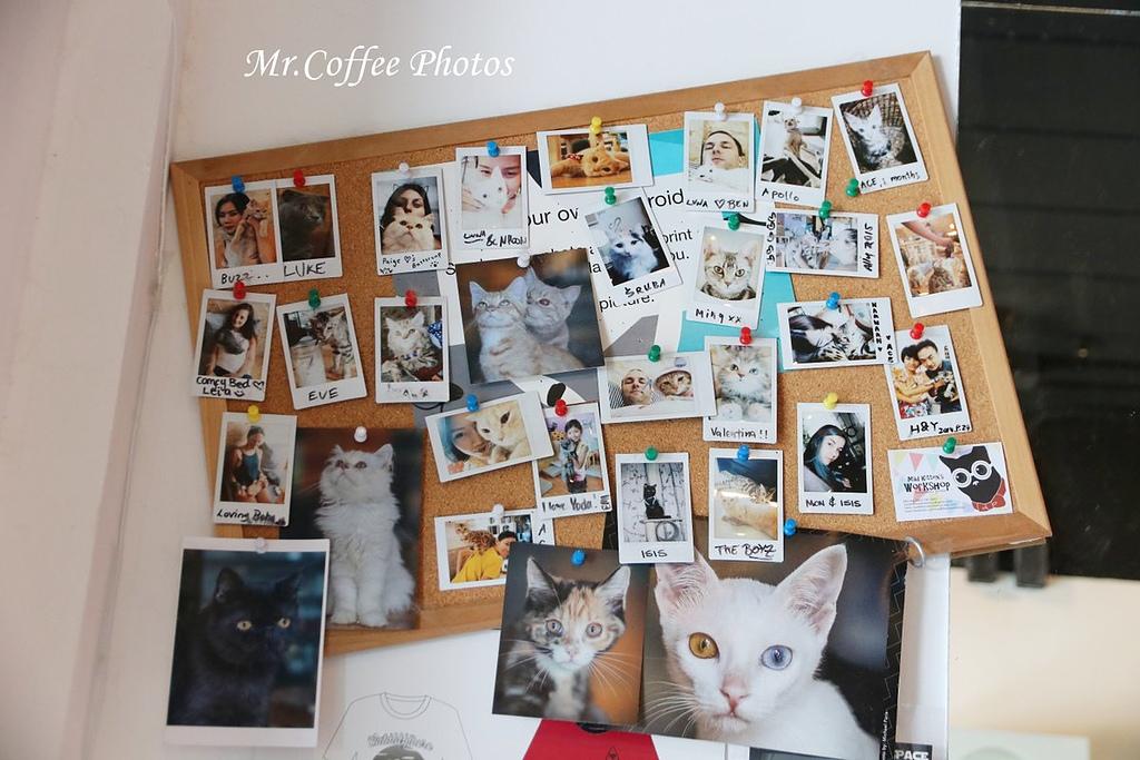 IMG_20180524_223741.JPG - D17清邁 3貓咖啡 Catmosphere Cat Café