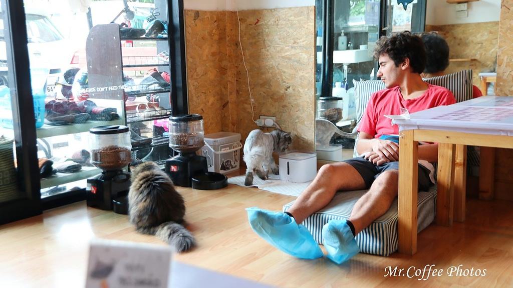 IMG_20180524_224229.JPG - D17清邁 3貓咖啡 Catmosphere Cat Café