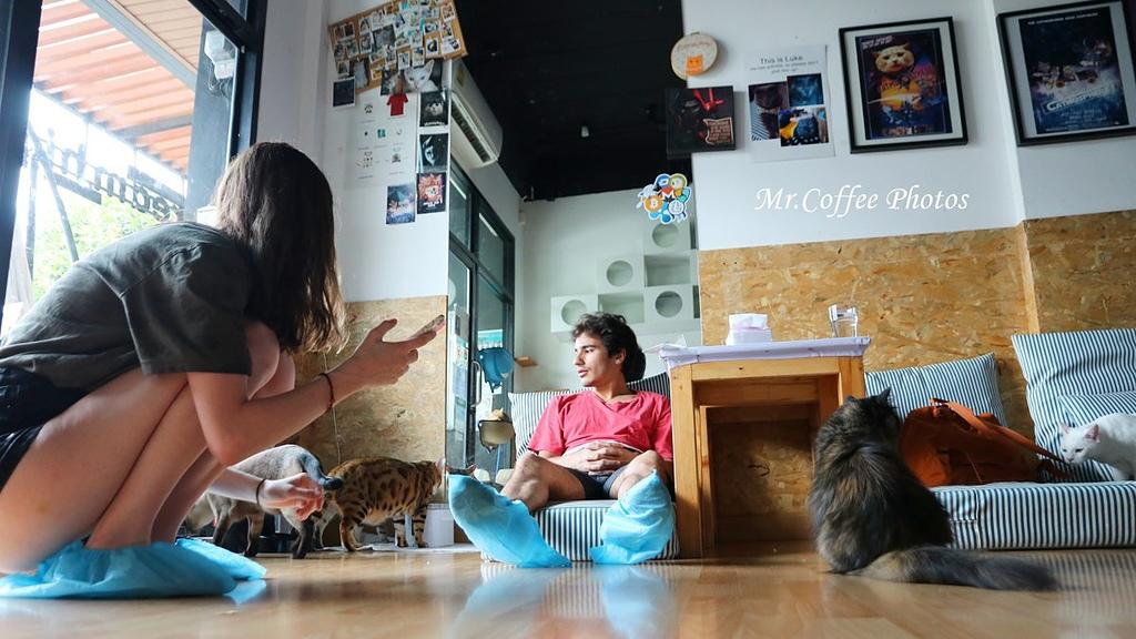 IMG_20180524_224548.JPG - D17清邁 3貓咖啡 Catmosphere Cat Café