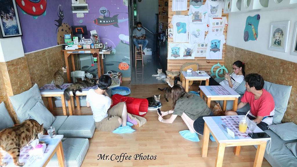 IMG_20180524_224738.JPG - D17清邁 3貓咖啡 Catmosphere Cat Café