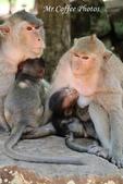 D14暹粒 5塔布隆寺-樹中廟、猴子與咖啡:IMG_2141.JPG
