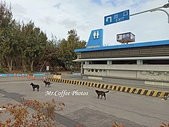 20-12-15 台中梧棲漁港:IMG_20201215_094121.jpg