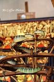 03.12-3蛇廟:IMG_9867.JPG