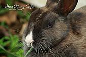 11.02.24 班班過新年:今年是兔年,妮妮兔在我們這邊也待兩年囉