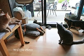 D17清邁 3貓咖啡 Catmosphere Cat Café:IMG_3266.JPG