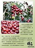 09.08.27 關於咖啡:06.咖啡漿果.jpg