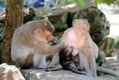 D14暹粒 5塔布隆寺-樹中廟、猴子與咖啡:IMG_2130.JPG