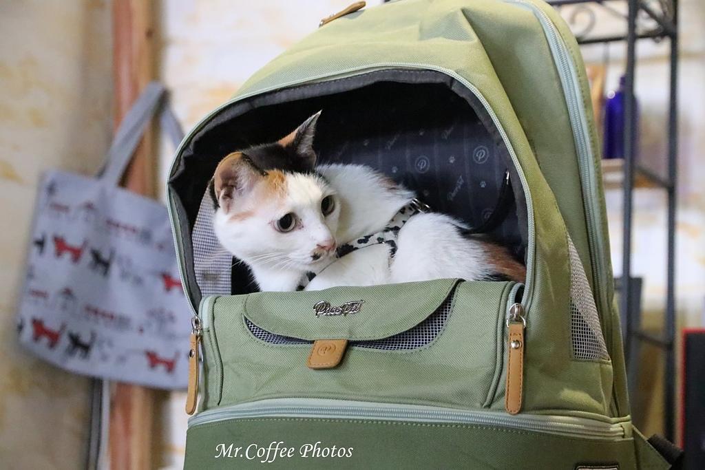 IMG_8950.JPG - 佩思沛-寵物貓包