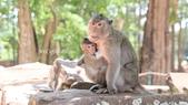 D14暹粒 5塔布隆寺-樹中廟、猴子與咖啡:IMG_2060.JPG