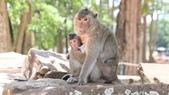 D14暹粒 5塔布隆寺-樹中廟、猴子與咖啡:IMG_2061.JPG