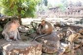 D14暹粒 5塔布隆寺-樹中廟、猴子與咖啡:IMG_2078.JPG