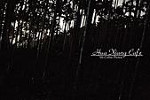 11.04.27【古坑】《山豬湖》賞螢火蟲:那一點一點像雜點的東西,就是螢火蟲啦!